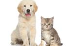 Простые советы по уходу за домашнем животным